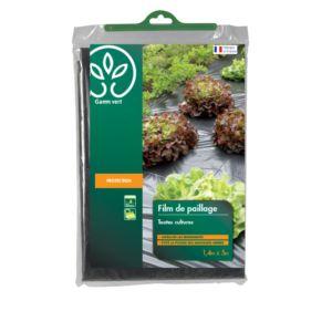 amaryllis belladonna une fiche plante jaime. Black Bedroom Furniture Sets. Home Design Ideas