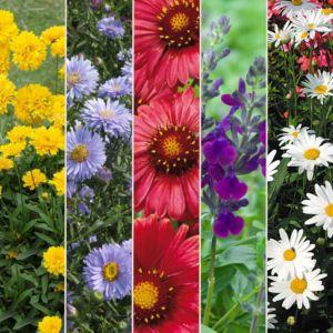 Kit de vivaces : Massif fleuri – Lot de 15 godets de 7 cm