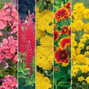 Kit de vivaces : Bouquet couleur chaude – Lot de 15 godets de 7 cm