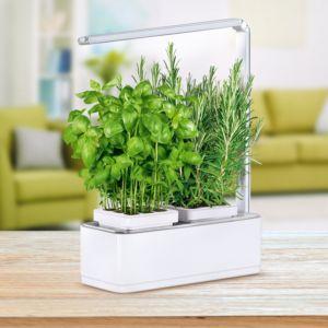 Potager d'intérieur gourmand 1,5L Nessia Kitchen Gardening PLANTES ET JARDINS – Jardinerie en ligne