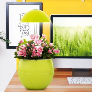 Potager d'intérieur 2L Nelia Kitchen Gardening vert anis limoncello PLANTES ET JARDINS – Jardinerie en ligne