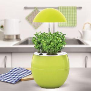 Potager d'intérieur 2L Nelia + Kit de démarrage Kitchen Gardening anis