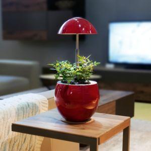 Potager d'intérieur 2L Nelia + Kit de démarrage Kitchen Gardening rouge