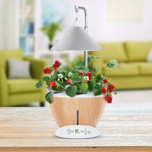 Potager d'intérieur 6L Nestor + Kit de démarrage Kitchen Gardening