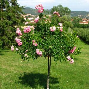 Pergola en bois l 39 installer dans son jardin ou sur sa terrasse et l 39 entretenir le magazine - Support pour rosier grimpant ...