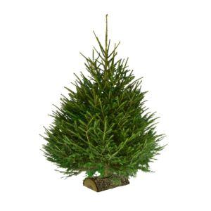 Sapin de Noël Epicea sur bûchette 200/250cm. Livraison incluse.