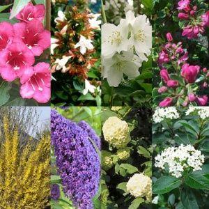 Kit de Haie Fleurie pour 10 m – 10 pots de 2 à 3 litres – PLANTES ET JARDINS – Jardinerie en ligne