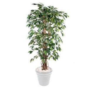 Ficus liane semi-artificiel H1m50