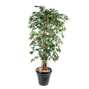 Ficus benjamina semi-artificiel 1m80