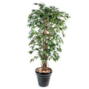 Ficus benjamina (feuillage artificiel) 2m10