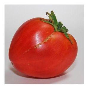 Tomate 'Coeur' (Lycopersicum hybride )