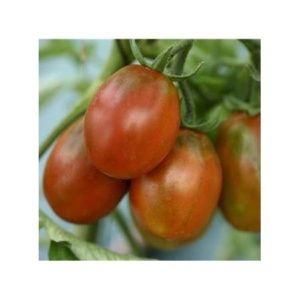 Tomate 'Prune Noire' (Lycopersicum hybride )