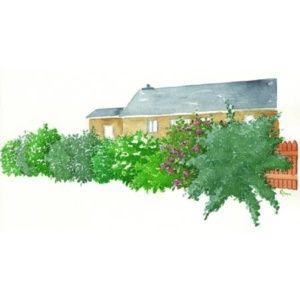 Kit de haie parfumée pour 10m – 10 arbustes de 30 à 40 cm en pot de 2 à 4L – PLANTES ET JARDINS – Jardinerie en ligne