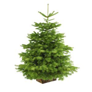 Sapin de Noël Nordmann sur bûchette 175/200cm. Livraison incluse.