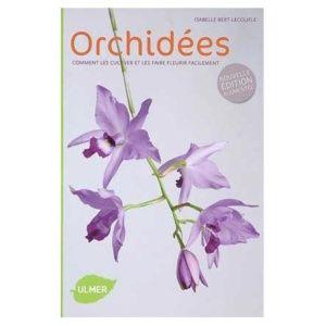 Orchidées : Comment les choisir et les cultiver facilement