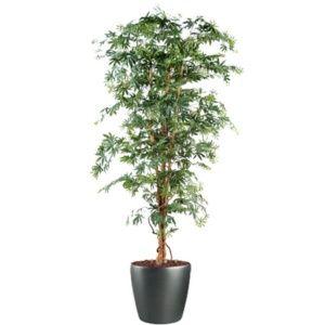 Aralia new grandes feuilles, 180cm (tronc naturel, feuillage artificiel) dans pot Lechuza anthracite