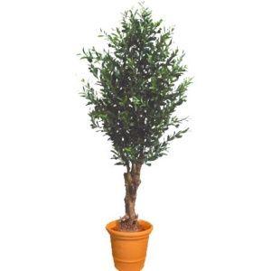 Olivier tronc noueux vert , hauteur 150 cm (tronc naturel, feuillage artificiel) + pot classique