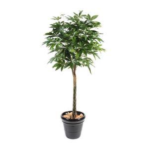 Pachira (Caféier boule), 180 cm (tronc naturel, feuillage artificiel) + pot classique (Pachira aquatica)