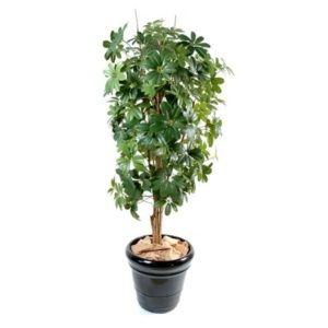 Schefflera vert, Hauteur 150 cm (tronc naturel, feuillage artificiel) + pot classique