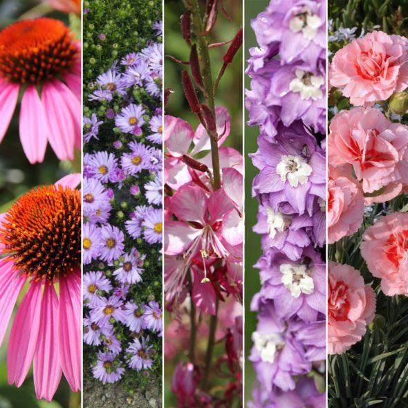 Kit de vivaces : Moderne et graphique pour jardinière