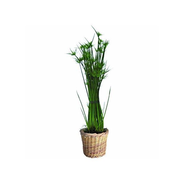 papyrus haspan cache pot tress plantes et jardins. Black Bedroom Furniture Sets. Home Design Ideas