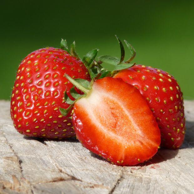 fraisier remontant 39 mara des bois 39 plantes et jardins. Black Bedroom Furniture Sets. Home Design Ideas