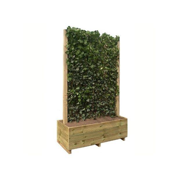 haie de lierre 39 woerner 39 mobilane en jardini re hauteur 2m20 plantes et jardins. Black Bedroom Furniture Sets. Home Design Ideas