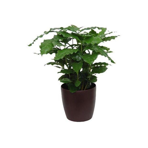 caf ier cache pot chocolat plantes et jardins. Black Bedroom Furniture Sets. Home Design Ideas