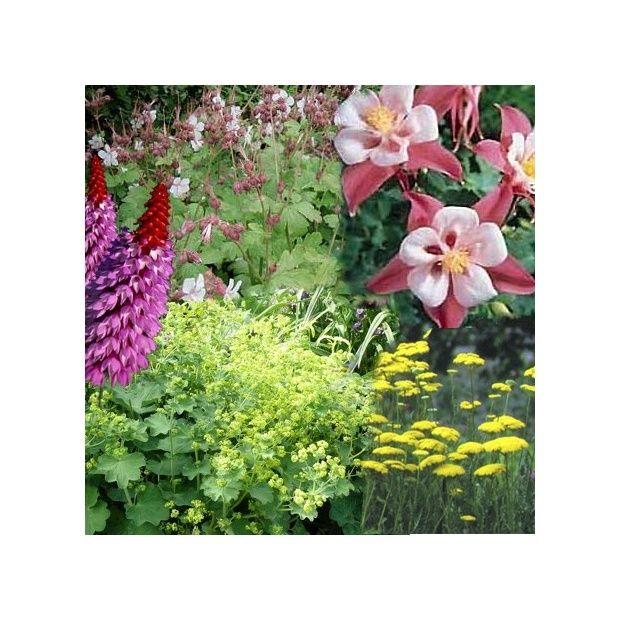 Assortiment vivaces pour jardin anglais plantes et jardins for Arbustes pour jardin anglais