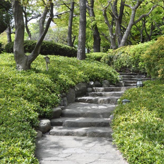 bambou nain shibataea kumasaca plantes et jardins. Black Bedroom Furniture Sets. Home Design Ideas