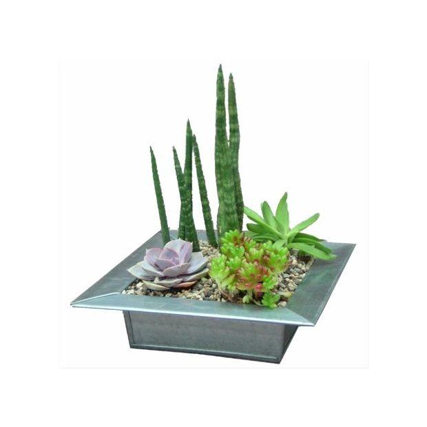 Kit composition de plantes grasses plat en zinc - Composition plantes grasses interieur ...