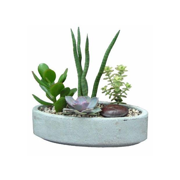 Kit composition de plantes grasse pot b ton ovale plantes et jardins - Composition plantes grasses exterieur ...