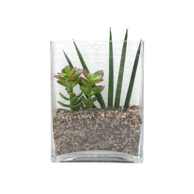 kit composition de plantes grasses en verrerie plantes et jardins. Black Bedroom Furniture Sets. Home Design Ideas