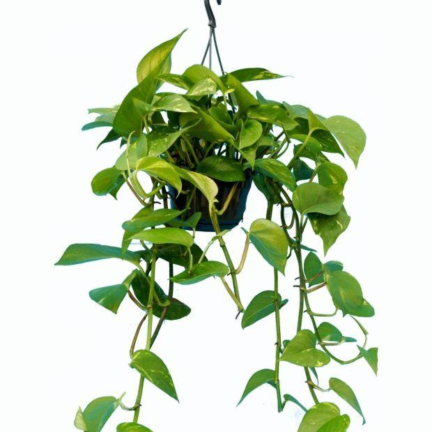Plante vivace retombante id es de for Plante et jardins