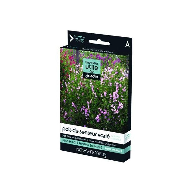 une fleur utile au jardin le pois de senteur plantes et jardins. Black Bedroom Furniture Sets. Home Design Ideas