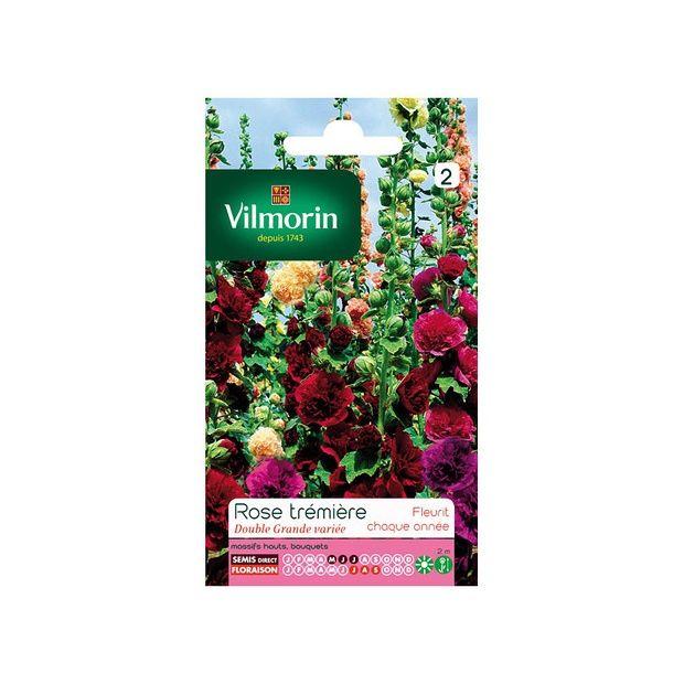 Rose tr mi re double grande vari e plantes et jardins - Rose tremiere en pot ...
