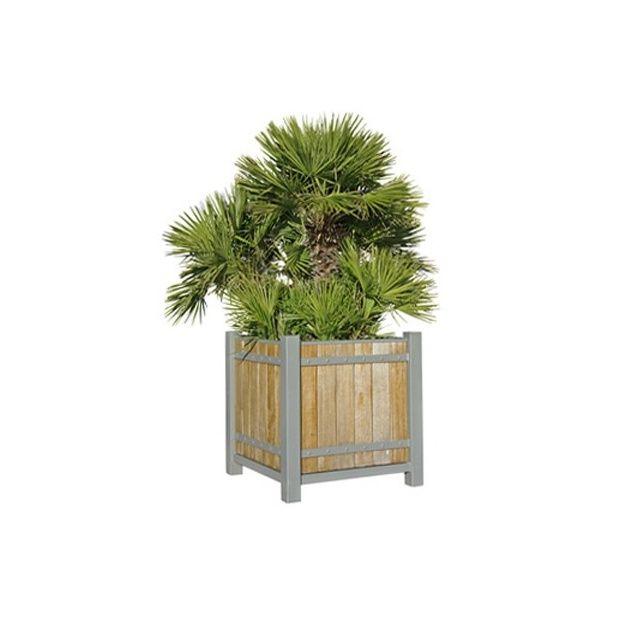 palmier nain 39 vulcano 39 plantes et jardins. Black Bedroom Furniture Sets. Home Design Ideas