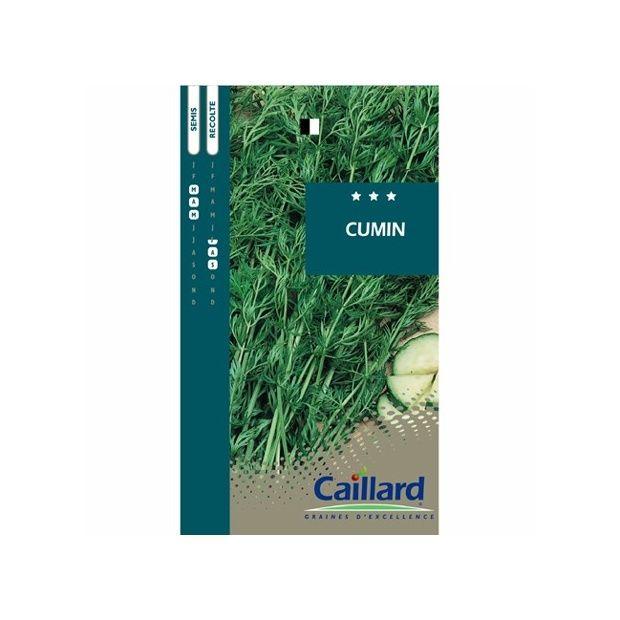 Cumin - Plantes et Jardins