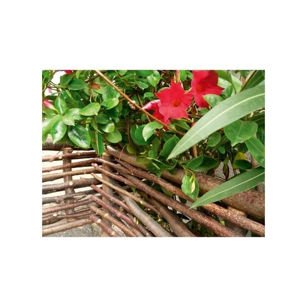 Bordure en noisetier et acacia intermas celloplast - Arbustes nains pour bordure ...