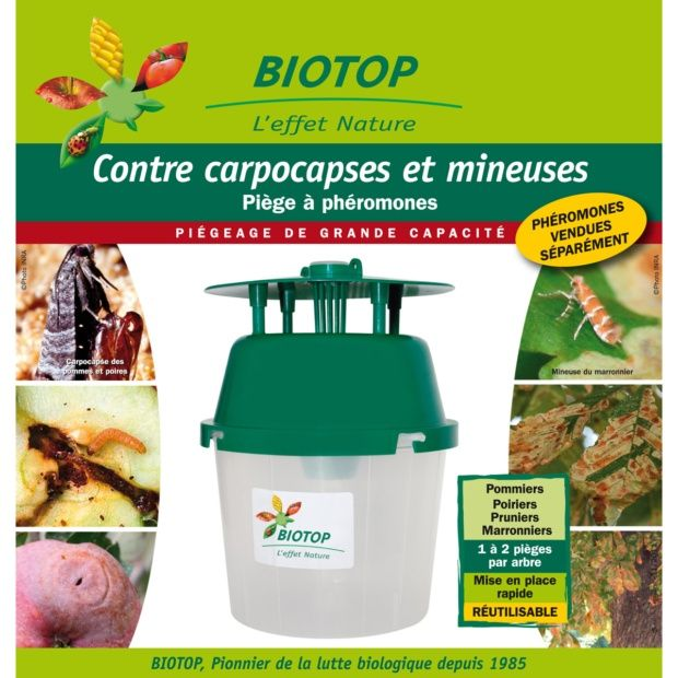 Pi ge entonnoir papillons carpocapses et mineuses biotop plantes et jardins - La mineuse des agrumes ...