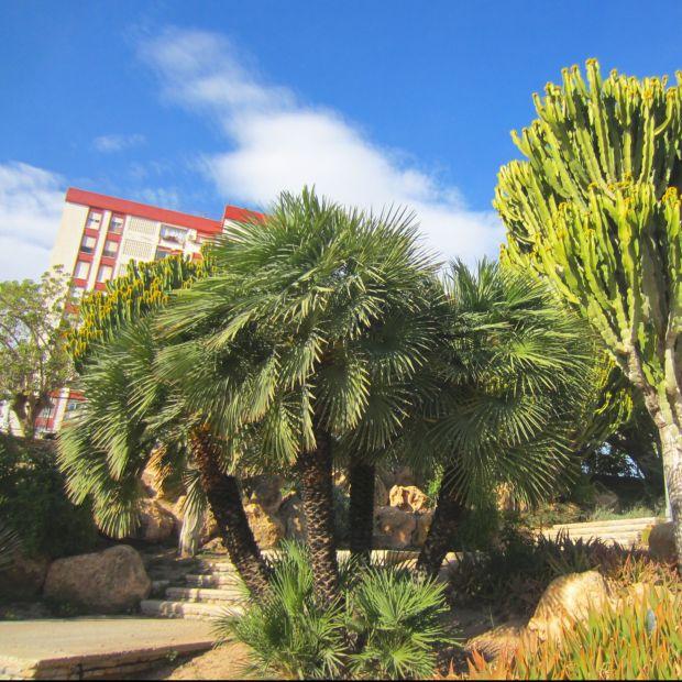 Palmier nain plantes et jardins for Palmier nain exterieur