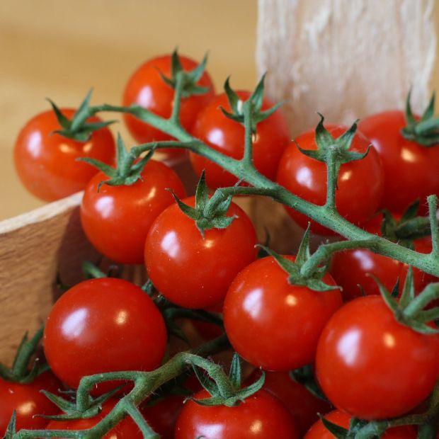 tomate cerise 39 supersweet 100 39 hybride f1 plantes et jardins. Black Bedroom Furniture Sets. Home Design Ideas