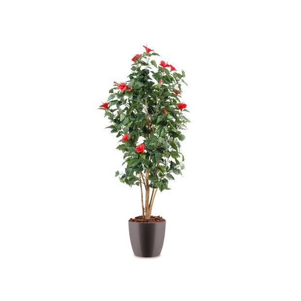 Hibiscus rouge h150cm tronc naturel feuillage artificiel for Hibiscus exterieur rouge
