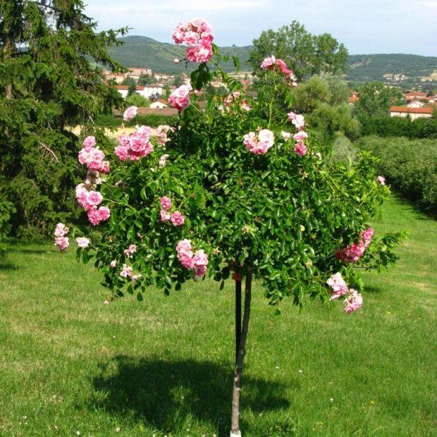 Tuteur pour rosier tige plantes et jardins - Tuteur pour plante grimpante ...