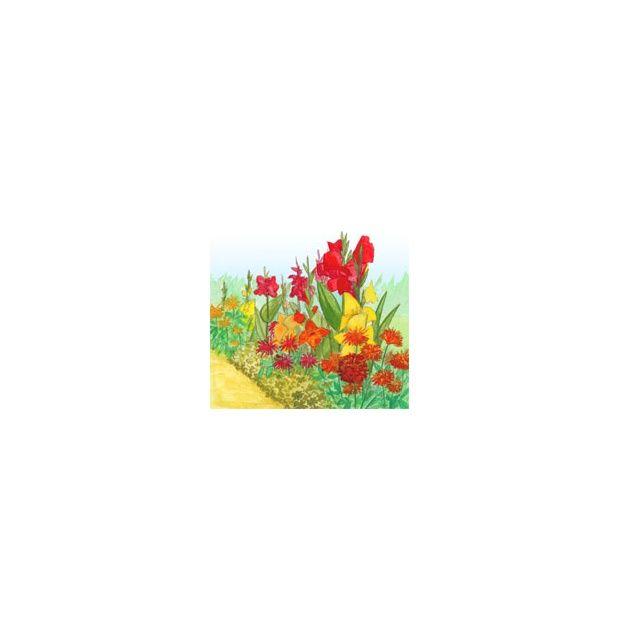Assortiment de bulbes d 39 t pour bordures plantes et jardins - Arbustes nains pour bordure ...