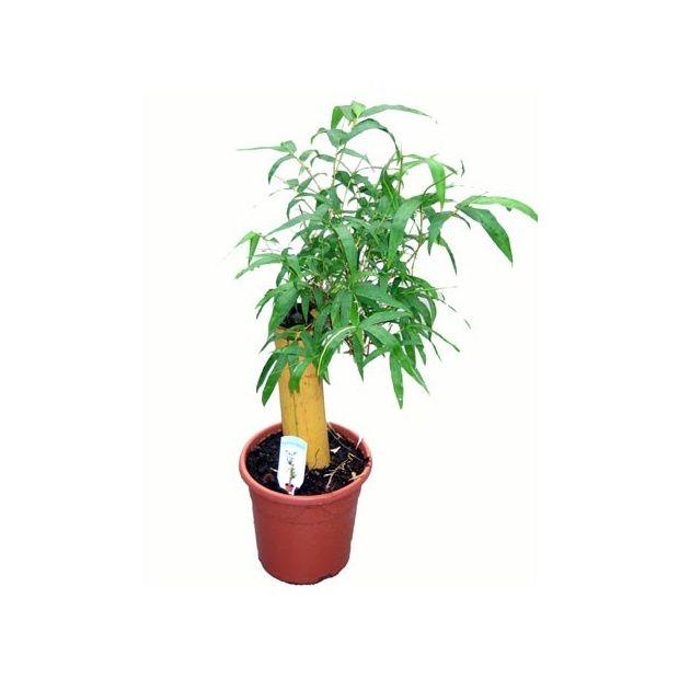 Bambou d 39 int rieur sur tronc plantes et jardins - Pot decoratif interieur ...