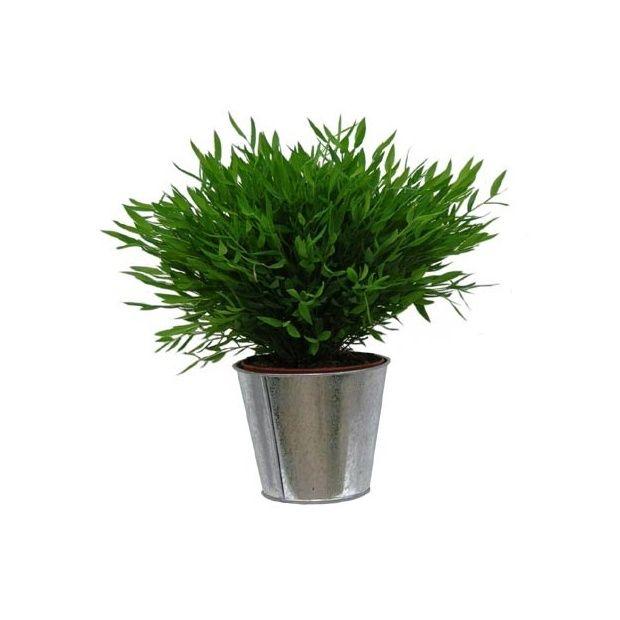 Bambou d 39 int rieur cache pot zinc plantes et jardins - Pot decoratif interieur ...