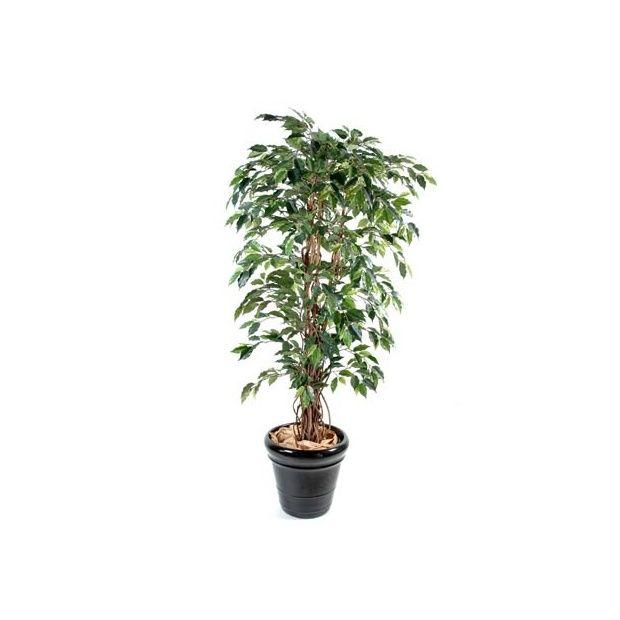 Ficus benjamina liane panach 2m10 tronc naturel for Bambou artificiel 2m