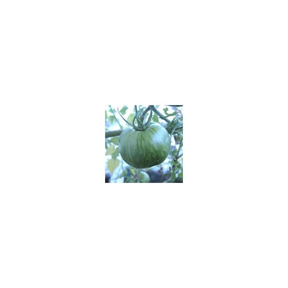 tomate 39 green zebra 39 plantes et jardins. Black Bedroom Furniture Sets. Home Design Ideas