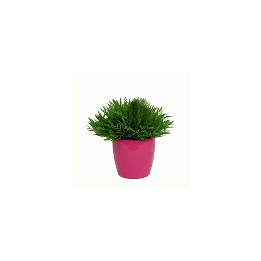 Plante interieur bambou maison design for Plante interieur bambou